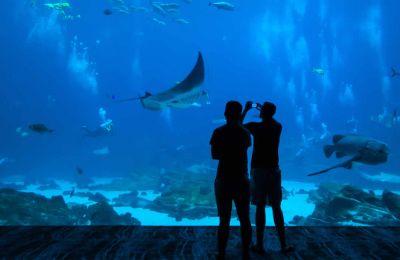 Aquarium de l'île Maurice