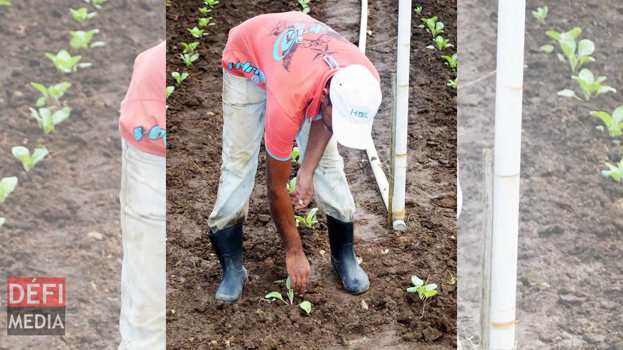 planteurs de légumes et fruits
