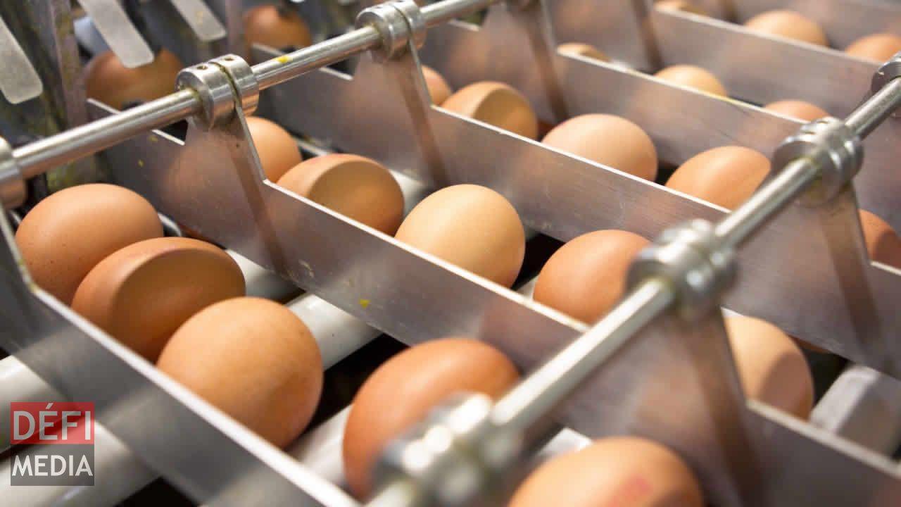 Des pâtes made in France sorties des rayons — Oeufs contaminés