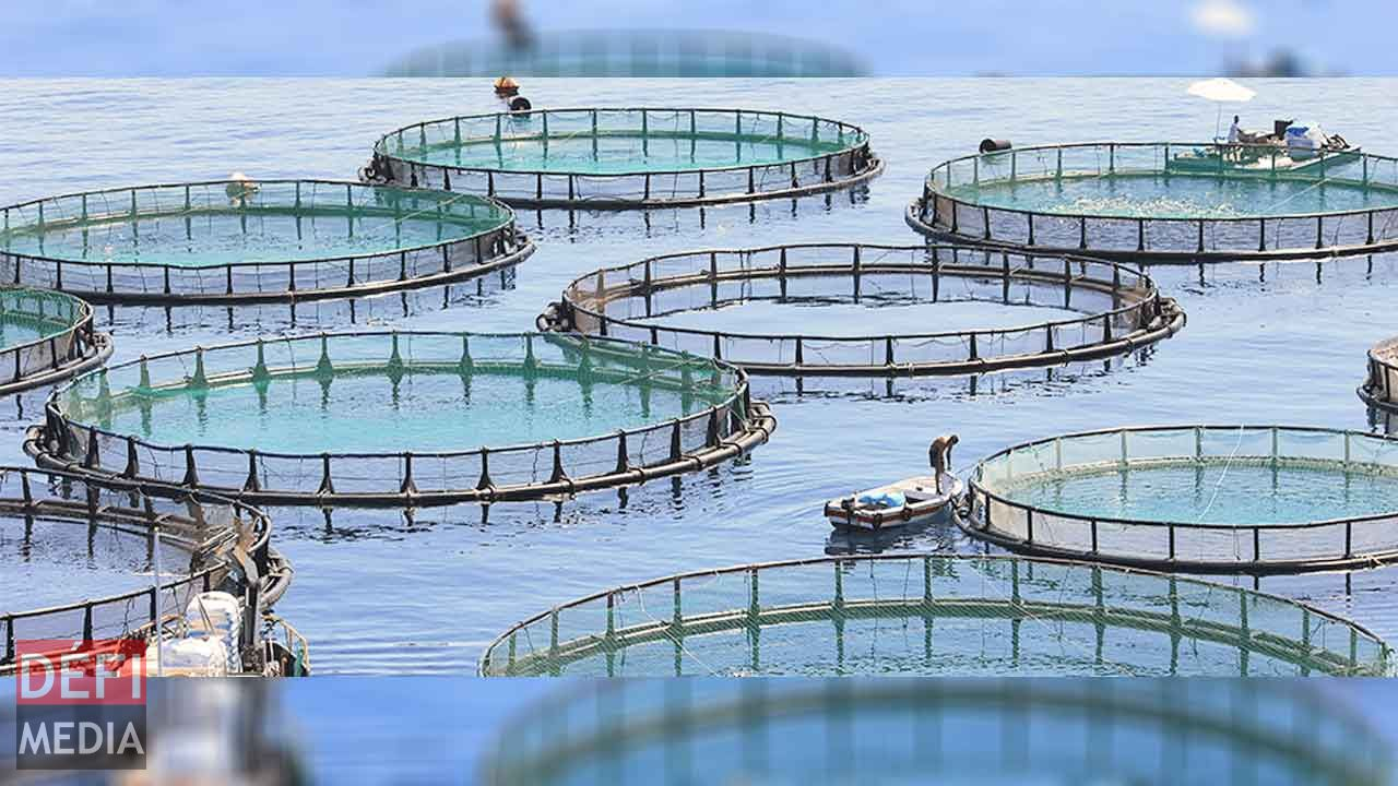 Aquaculture: Floating cages distributed to fishermen