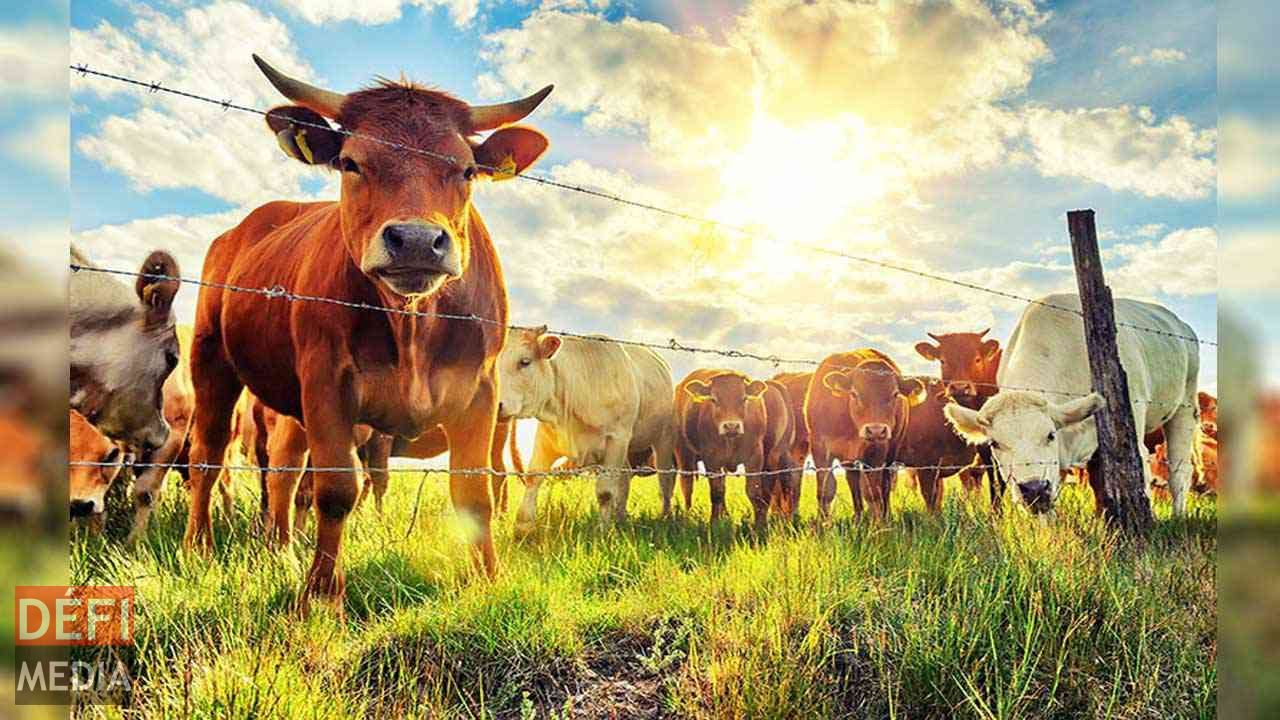 Mauritius prospects becoming Regional Livestock Policy Hub