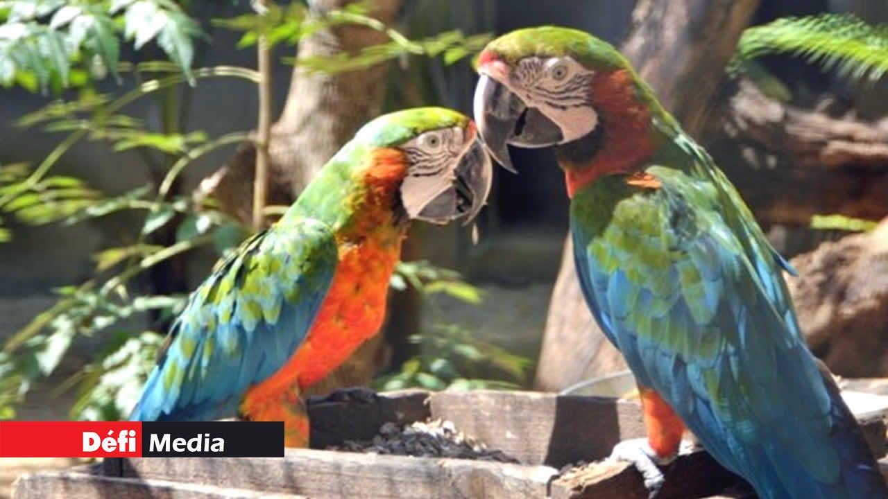 Trafic d'oiseaux