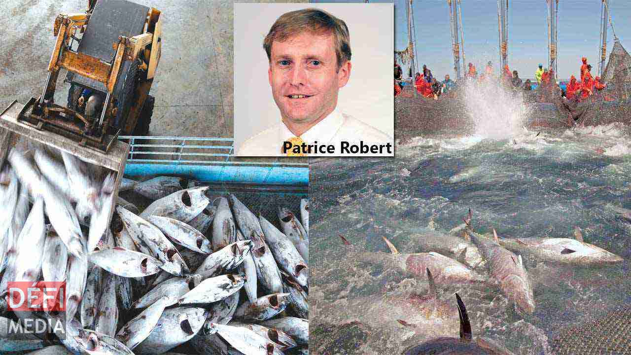 illegal fishing Read this essay on illegal fishing come browse our large digital warehouse of free sample essays get the knowledge you need in order to pass your classes and more.
