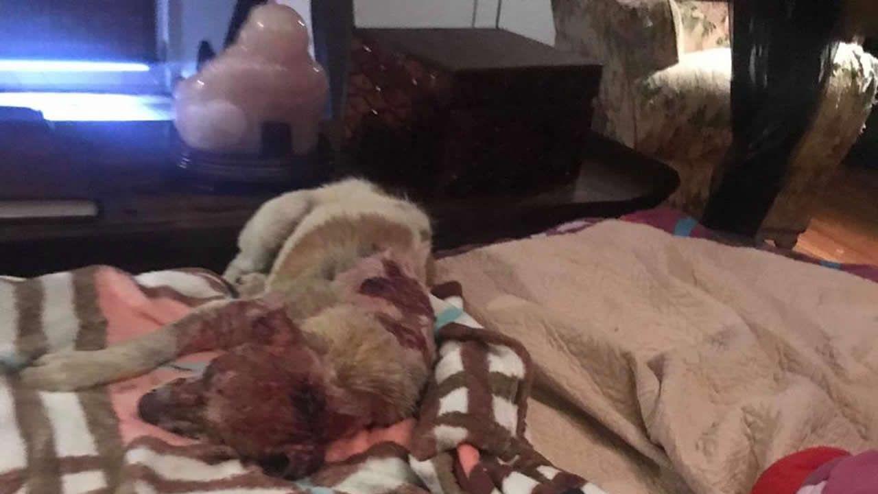 Buzz sur facebook -Dodo, le chien brûlé vif - Noémie Barragan : « Les peines pour maltraitance sont faibles »