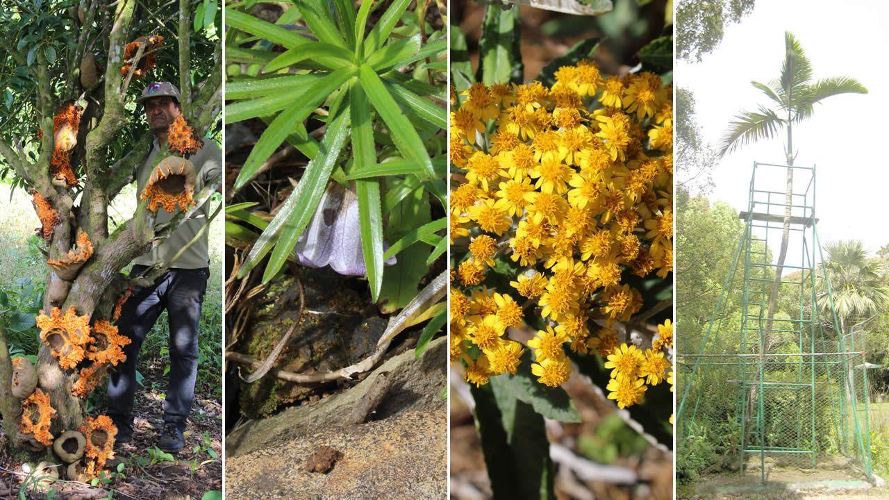 Plantes endémiques : 125 espècessont menacées d'extinction