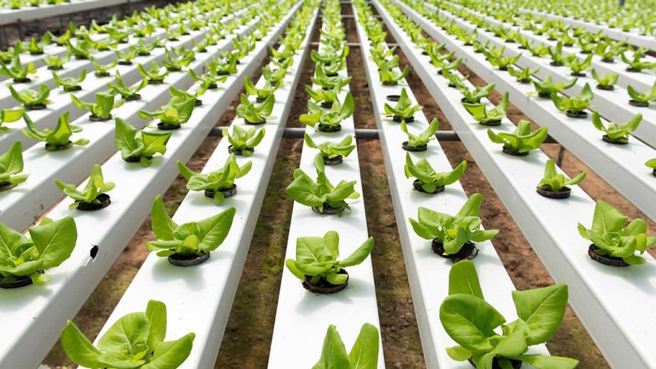Agriculture hydroponique