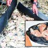 Découverte d'héroïne à Forbach : l'Adsu tente d'établir un lien avec les billets brûlés dans un champ