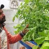 Hansraj Seechurn : endorsing aquaponics for a healthy living