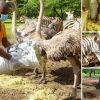 Casela Nature Parks : les soigneurs aux petits soins des animaux malgré le confinement