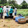 Verdun : vente de légumes en période de confinement