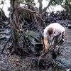 Petit Bel-Air, à Mahébourg : au grand nettoyage des racines de mangroves, étouffant dans l'hydrocarbure